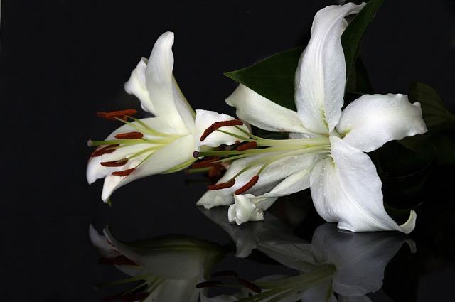 flower-651138_640